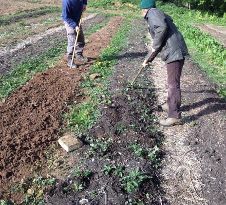 gardening 11 crop small
