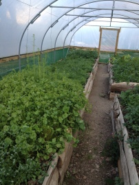gardening 5 small