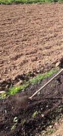 gardening crop small