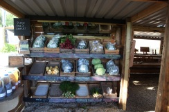 Benny veg stall 3 (small)