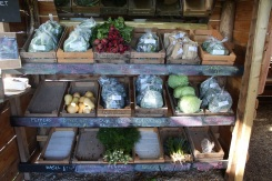 Benny veg stall 4 (small)