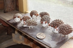 Hedgehogs for sale 1 - small
