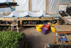 buckets in polytunnel small