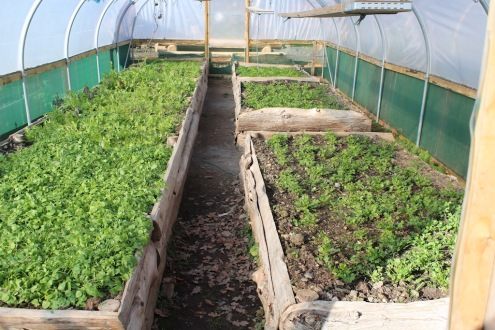 polytunnel 2 small