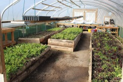 polytunnel 3 small