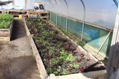 polytunnel 4 small