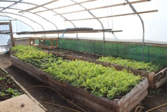 polytunnel and hose small