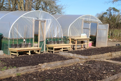 polytunnel close up small