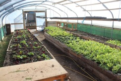 polytunnel open door small
