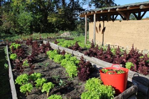 veg garden 2 small