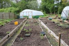 Veg plot 1 small